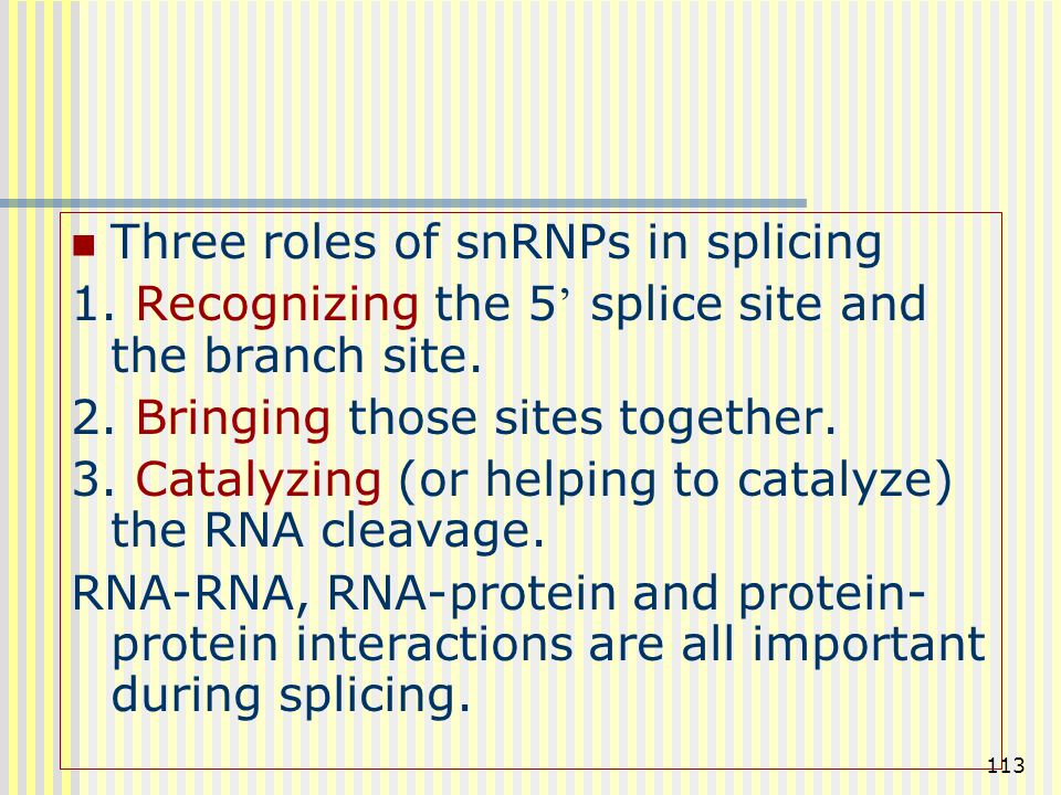 Three roles of snRNPs in splicing