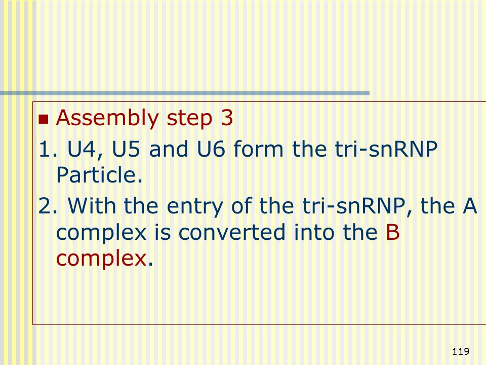 Assembly step 3 1. U4, U5 and U6 form the tri-snRNP Particle.