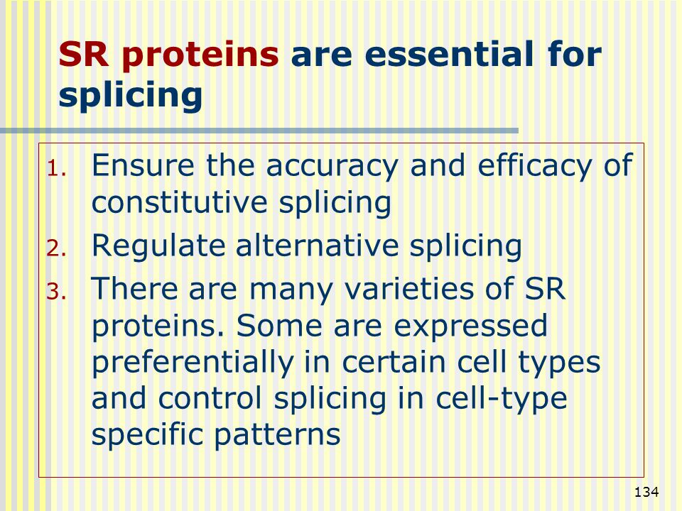 SR proteins are essential for splicing