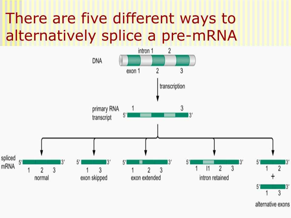 There are five different ways to alternatively splice a pre-mRNA