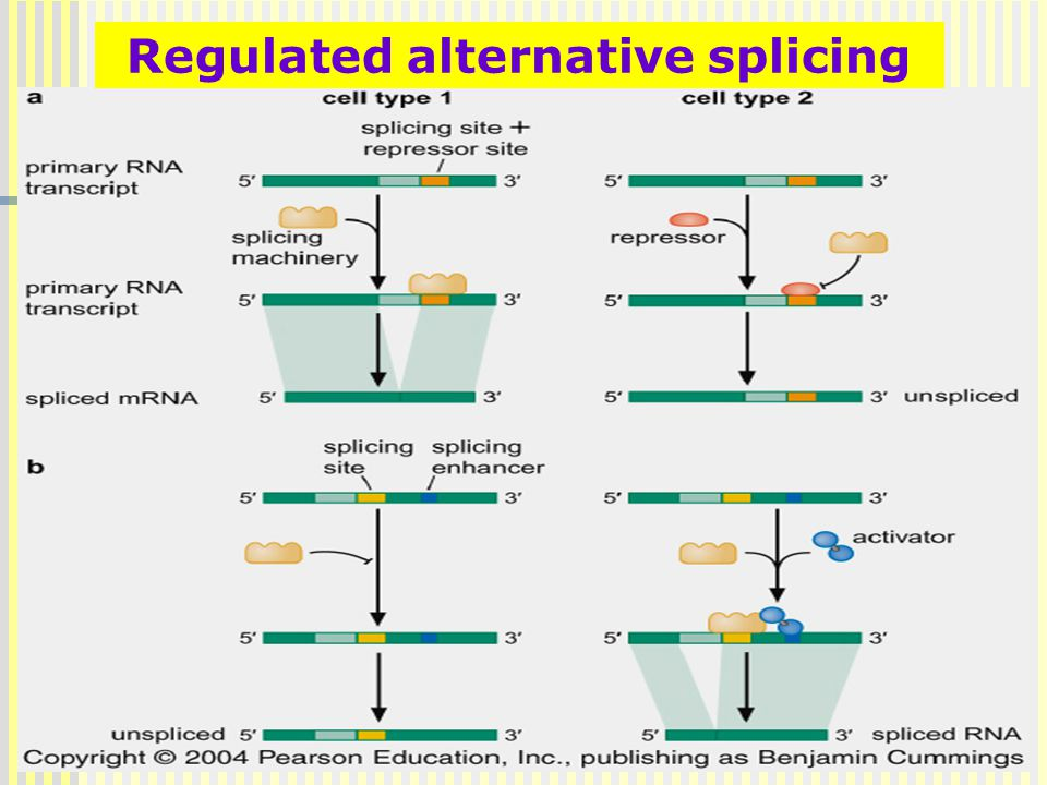 Regulated alternative splicing