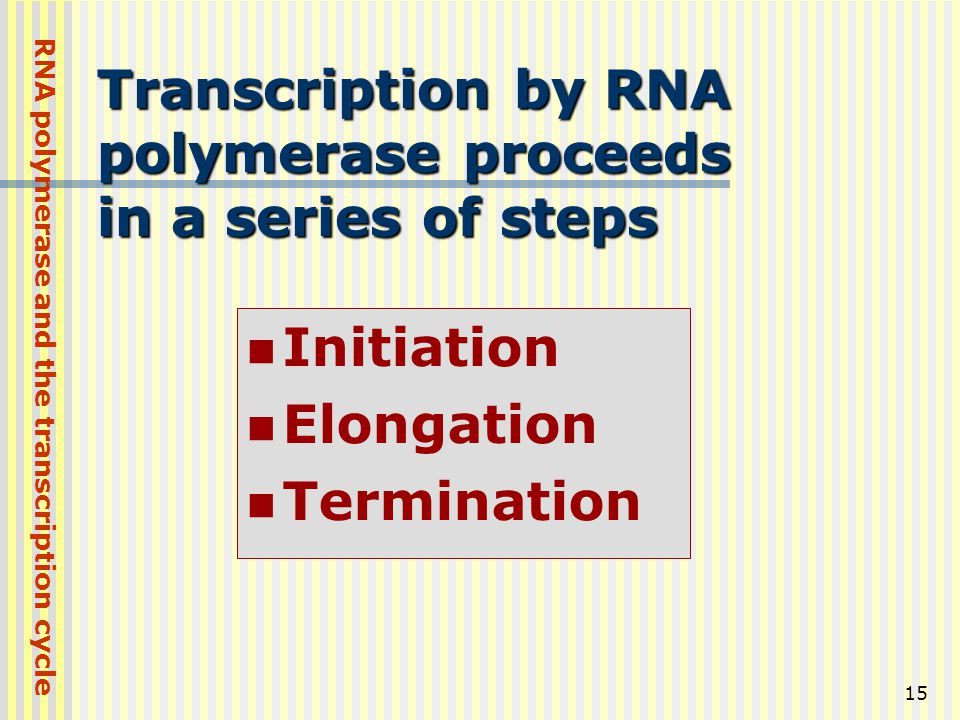 Transcription by RNA polymerase proceeds in a series of steps
