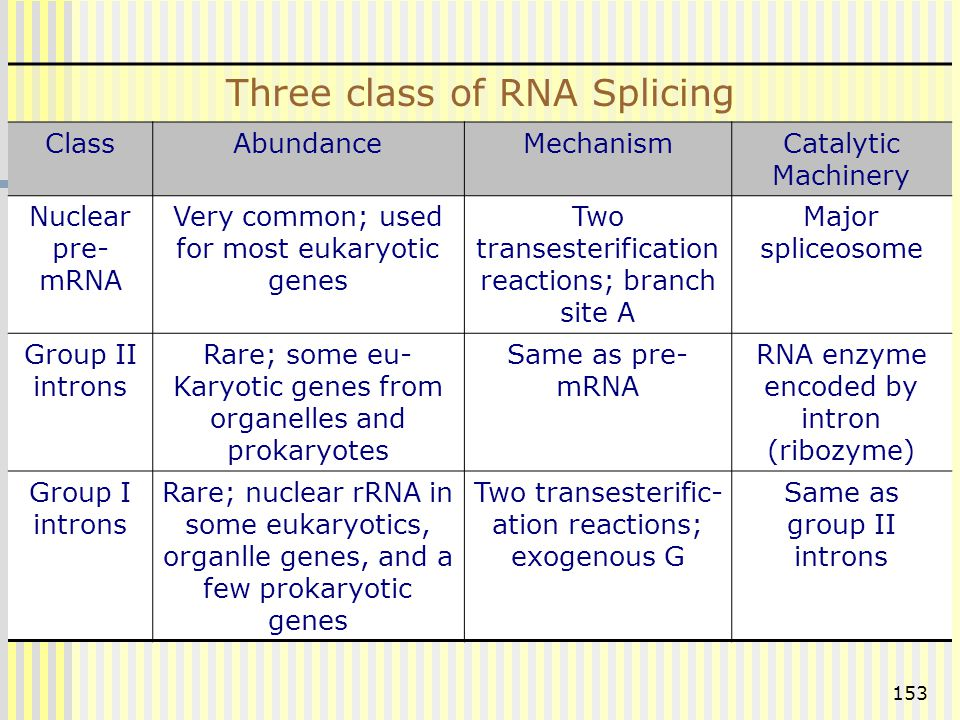 Three class of RNA Splicing