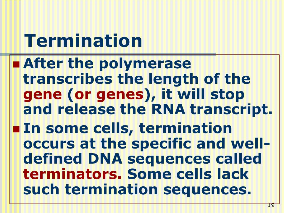 Termination After the polymerase transcribes the length of the gene (or genes), it will stop and release the RNA transcript.