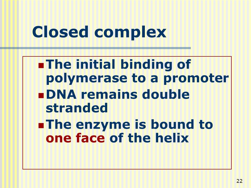 Closed complex The initial binding of polymerase to a promoter
