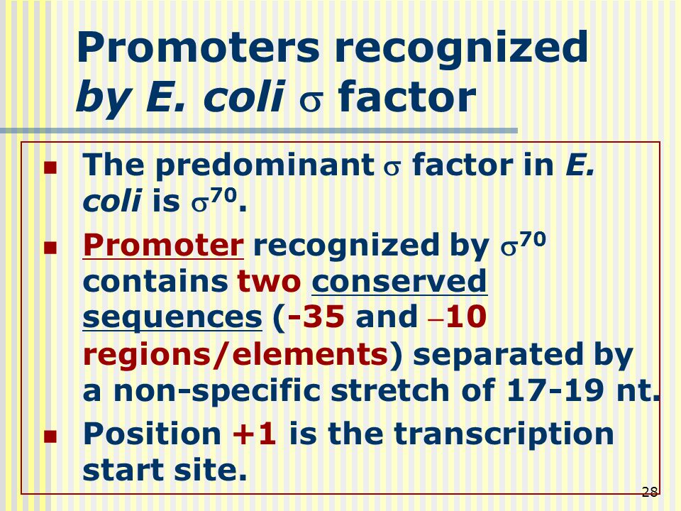 Promoters recognized by E. coli s factor