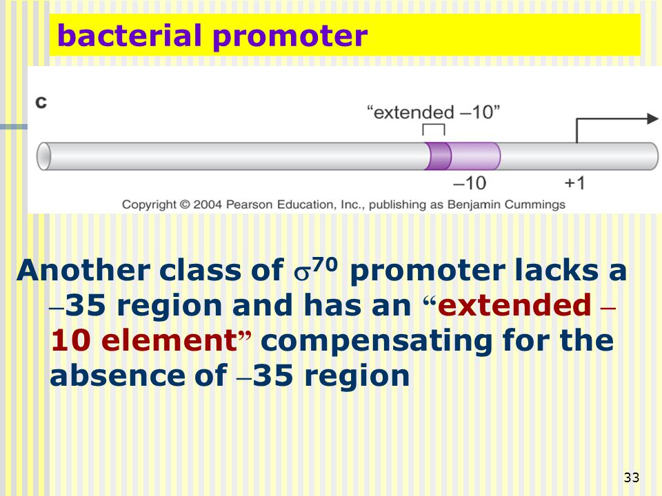 bacterial promoter Another class of s70 promoter lacks a –35 region and has an extended –10 element compensating for the absence of –35 region.