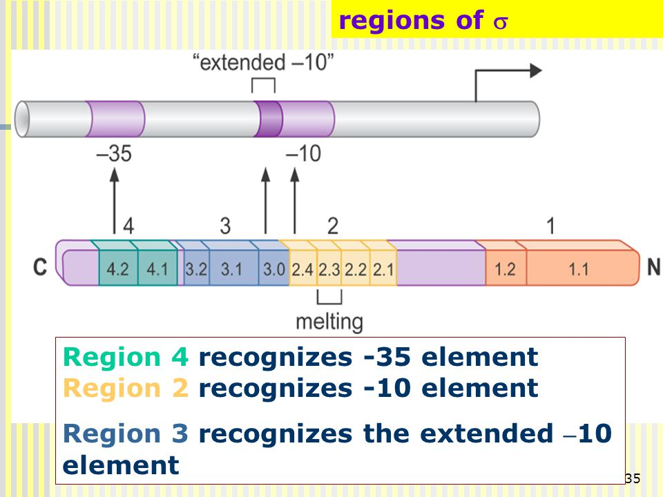 regions of s Region 4 recognizes -35 element Region 2 recognizes -10 element.