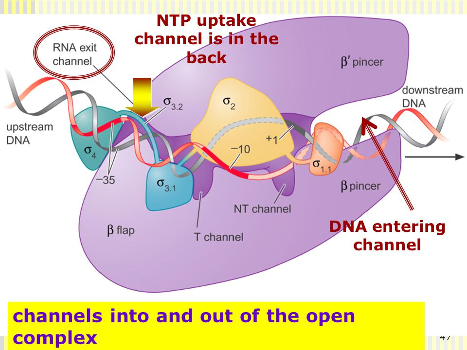 channels into and out of the open complex