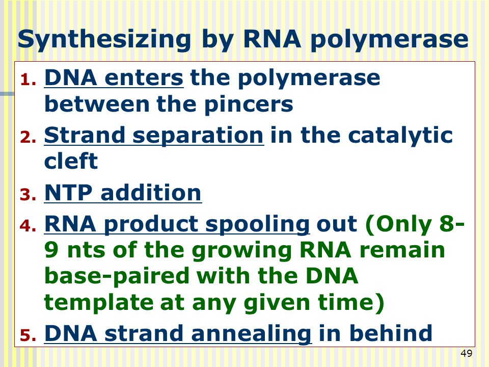 Synthesizing by RNA polymerase