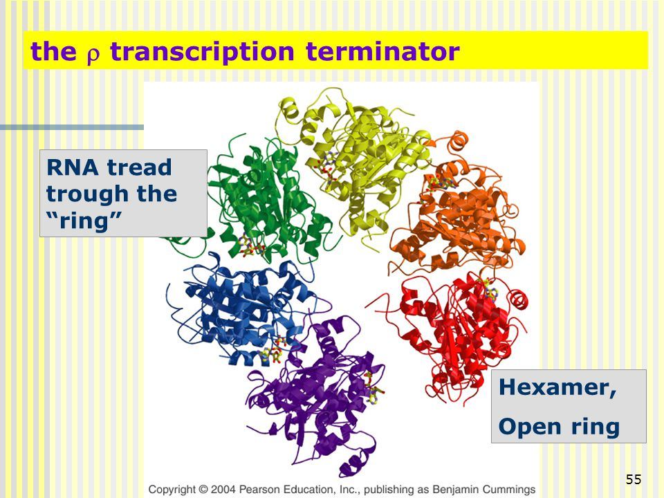 the r transcription terminator