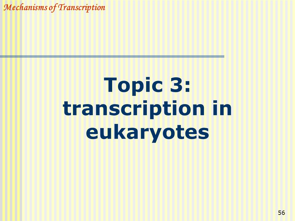 Topic 3: transcription in eukaryotes