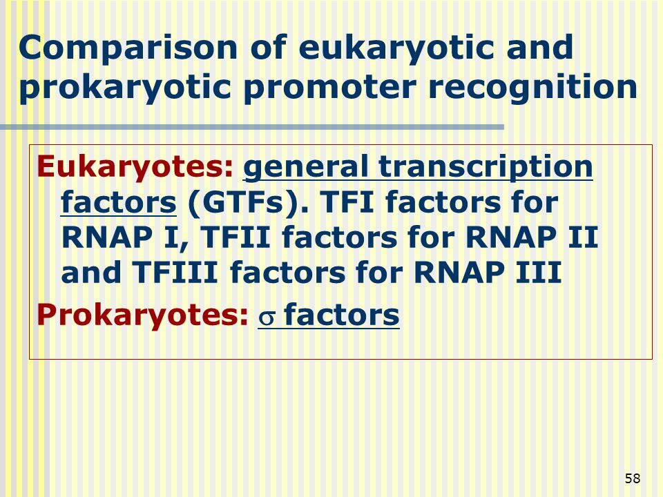 Comparison of eukaryotic and prokaryotic promoter recognition