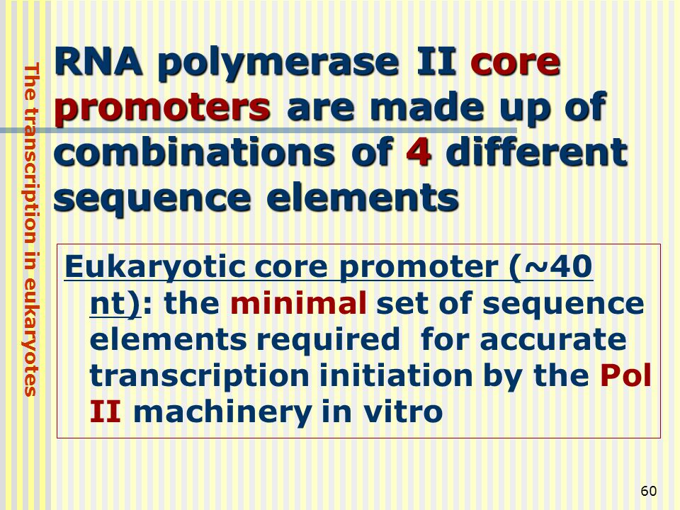 The transcription in eukaryotes