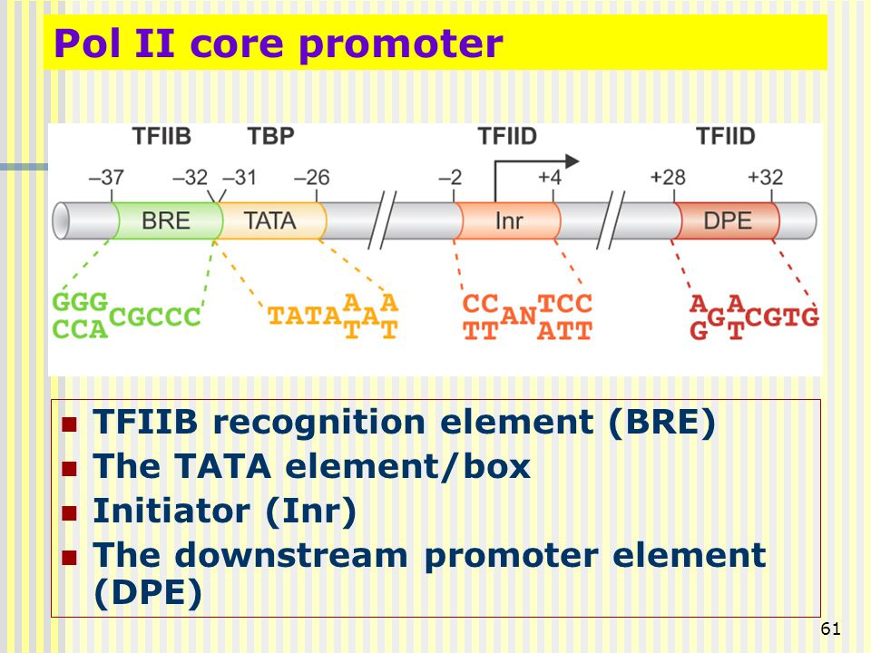 Pol II core promoter TFIIB recognition element (BRE)