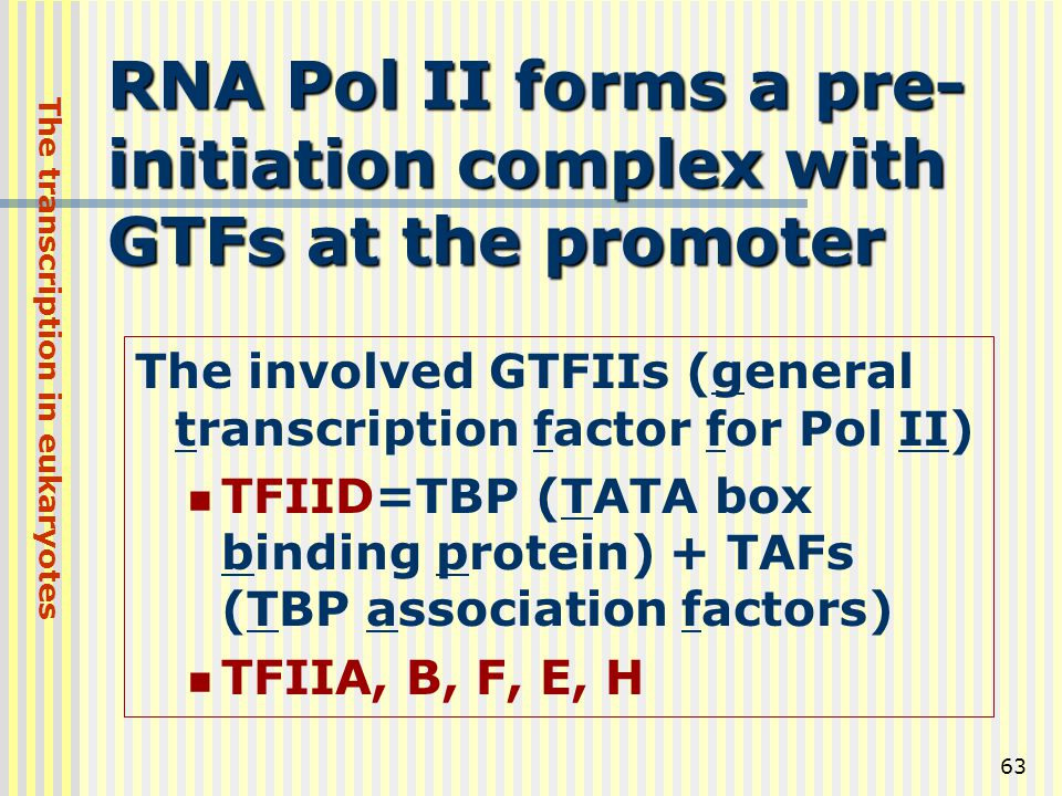 RNA Pol II forms a pre-initiation complex with GTFs at the promoter