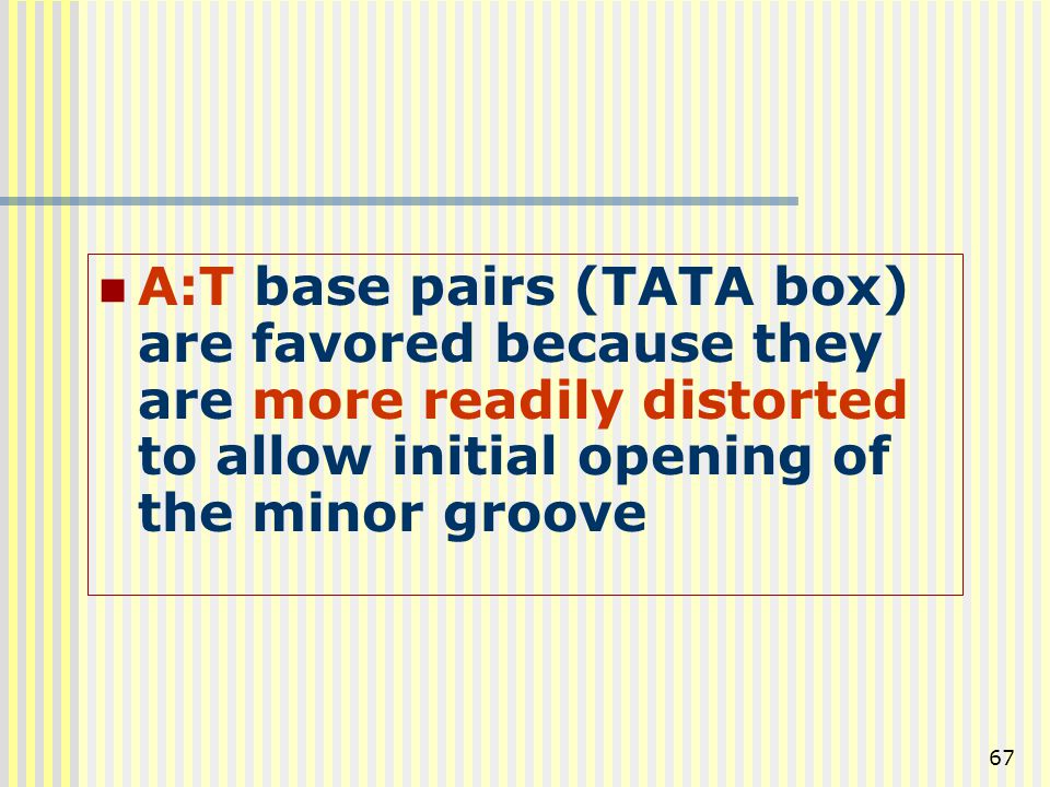 A:T base pairs (TATA box) are favored because they are more readily distorted to allow initial opening of the minor groove