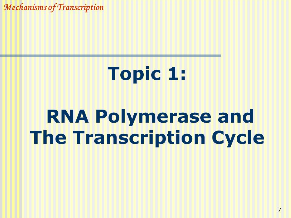 Topic 1: RNA Polymerase and The Transcription Cycle