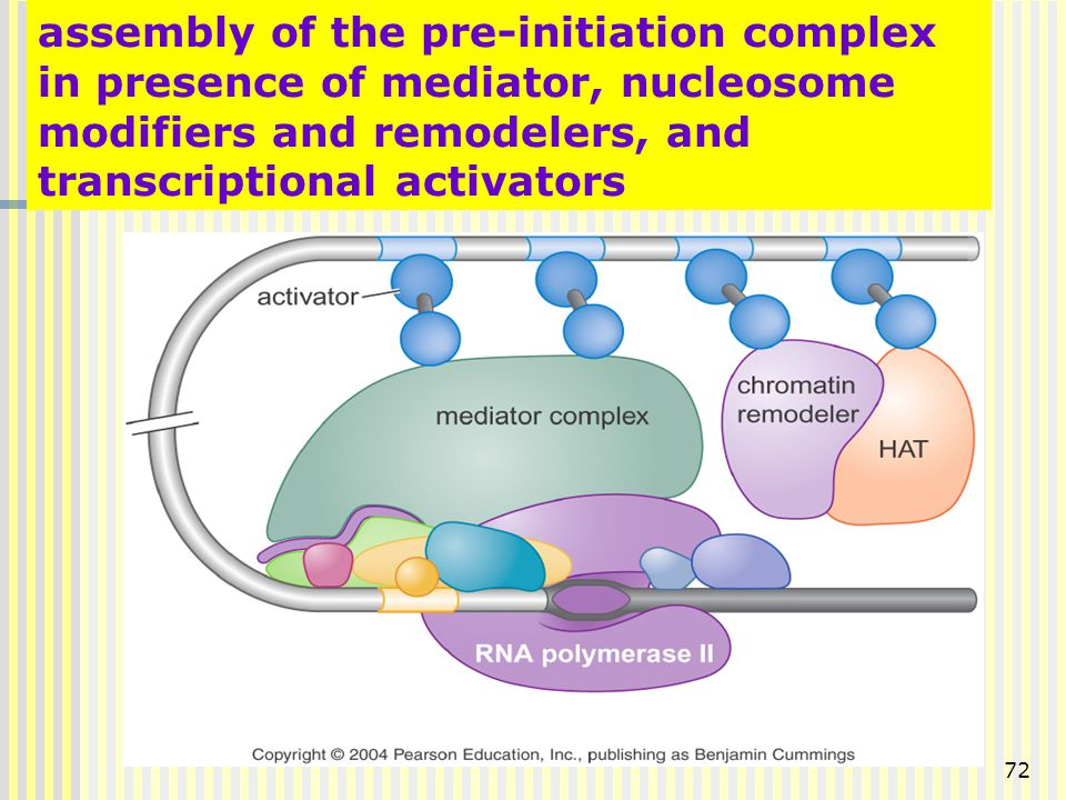 assembly of the pre-initiation complex in presence of mediator, nucleosome modifiers and remodelers, and transcriptional activators