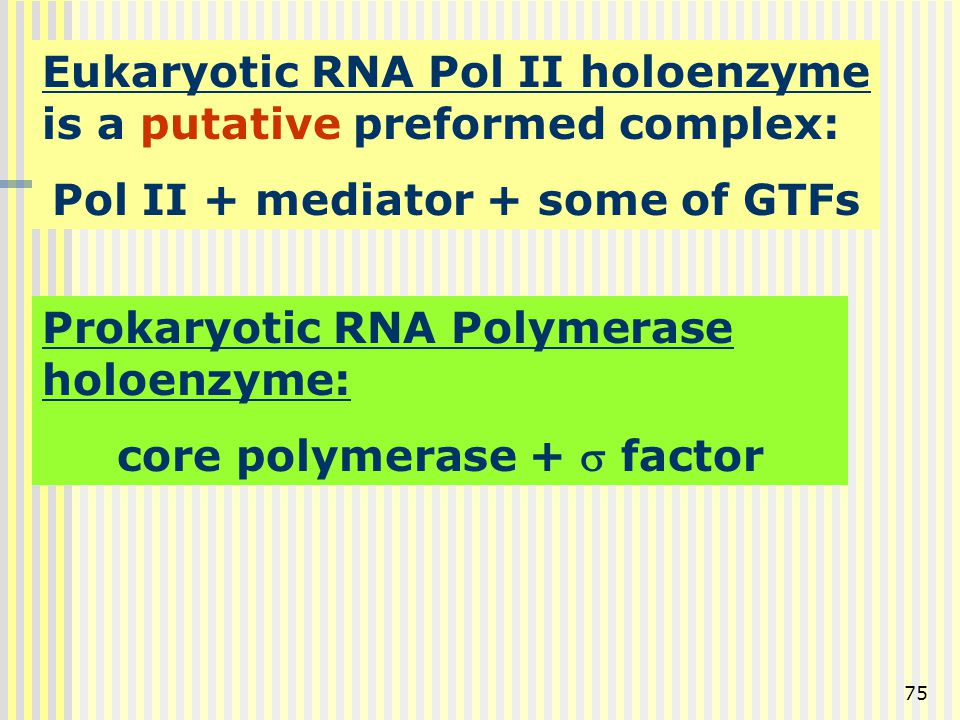 Pol II + mediator + some of GTFs core polymerase + s factor