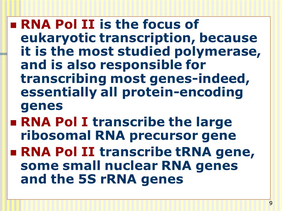RNA Pol II is the focus of eukaryotic transcription, because it is the most studied polymerase, and is also responsible for transcribing most genes-indeed, essentially all protein-encoding genes