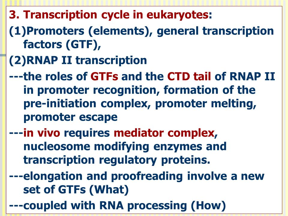 Transcription cycle in eukaryotes: