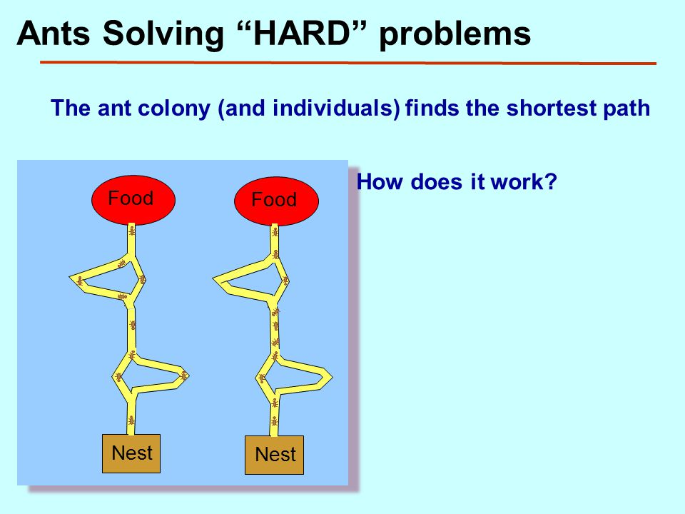 Ants Solving HARD problems