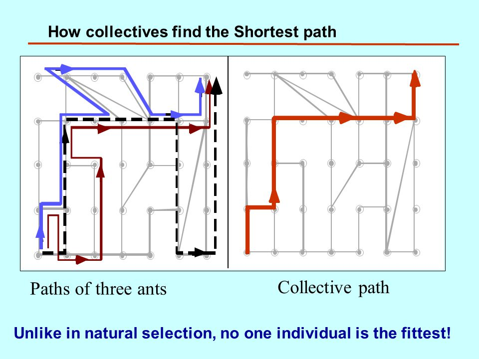 How collectives find the Shortest path