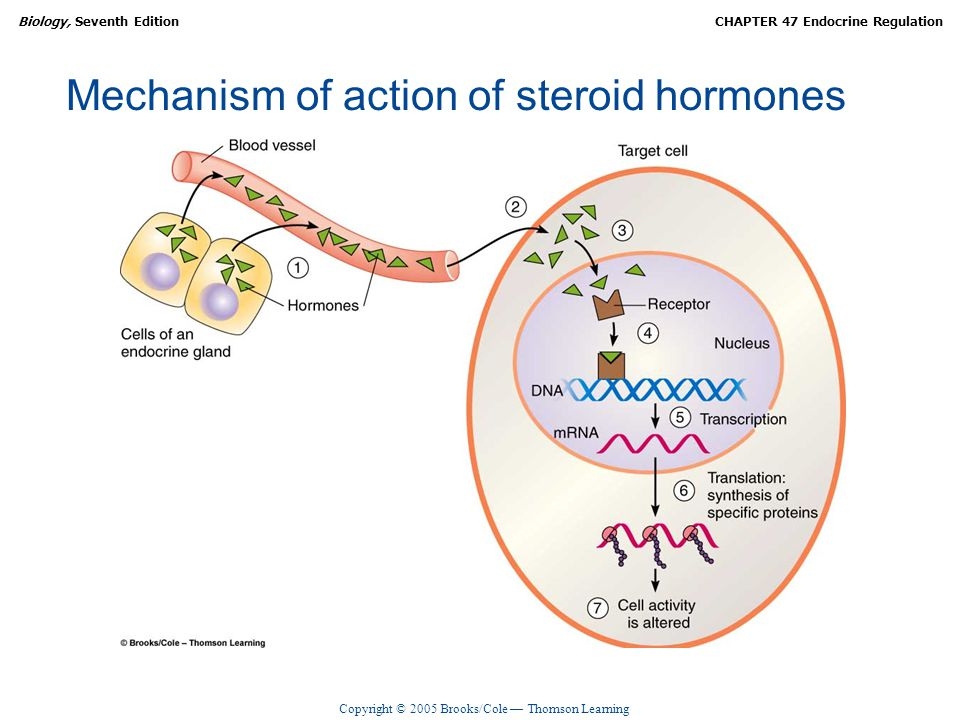 Mechanism of action of steroid hormones