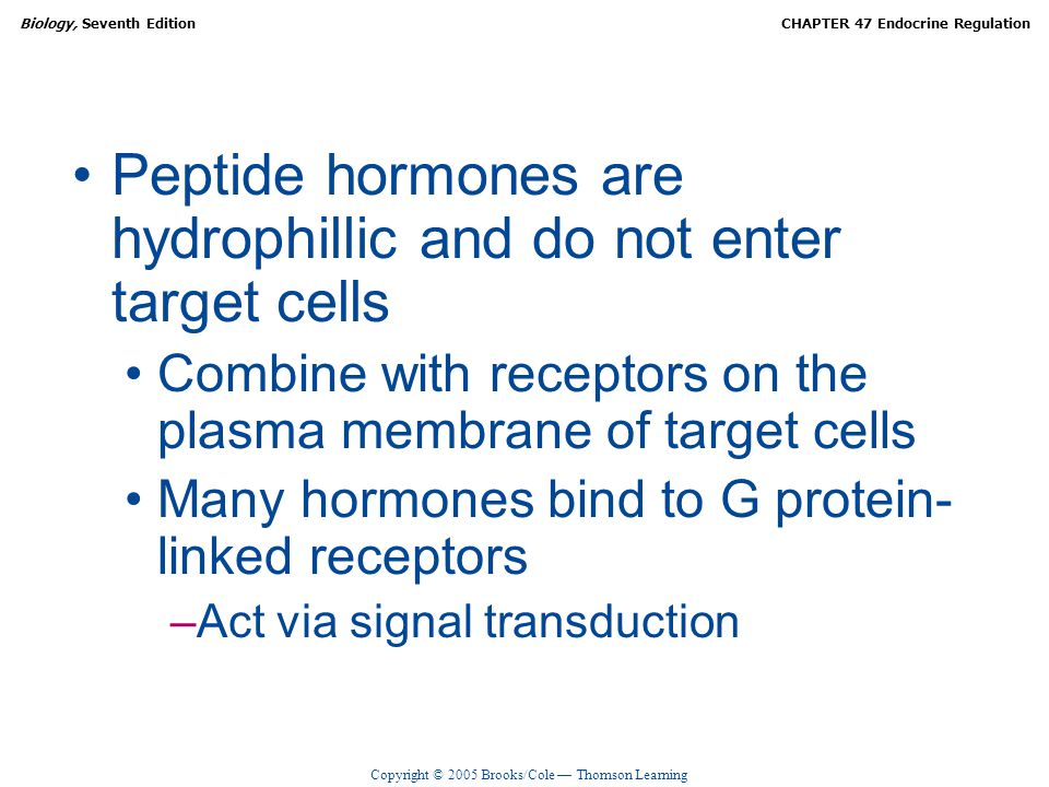 Peptide hormones are hydrophillic and do not enter target cells