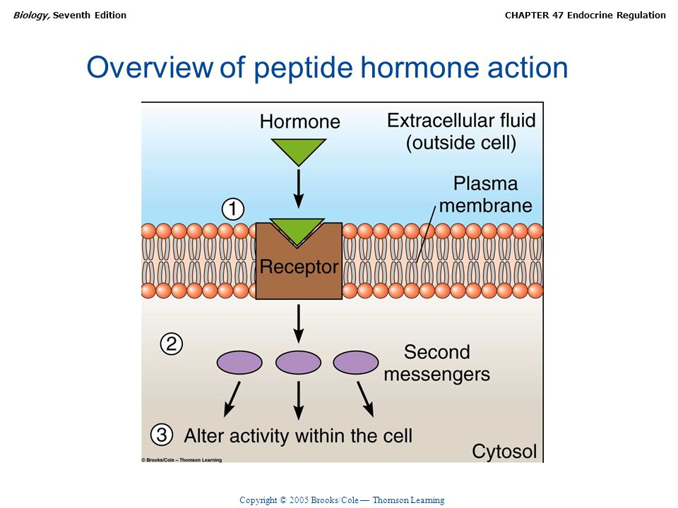 Overview of peptide hormone action