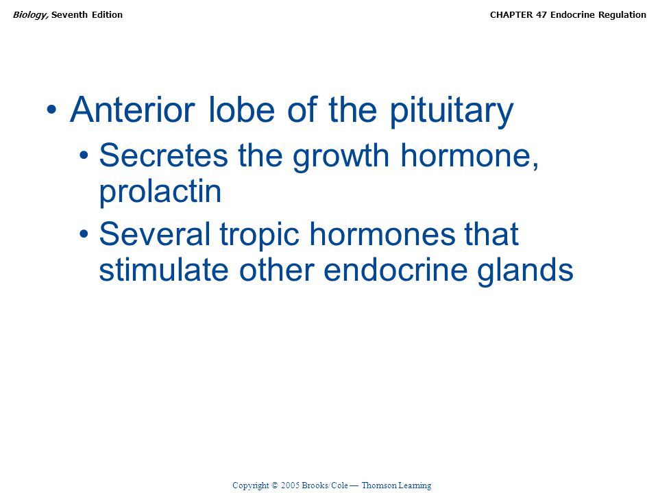 Anterior lobe of the pituitary