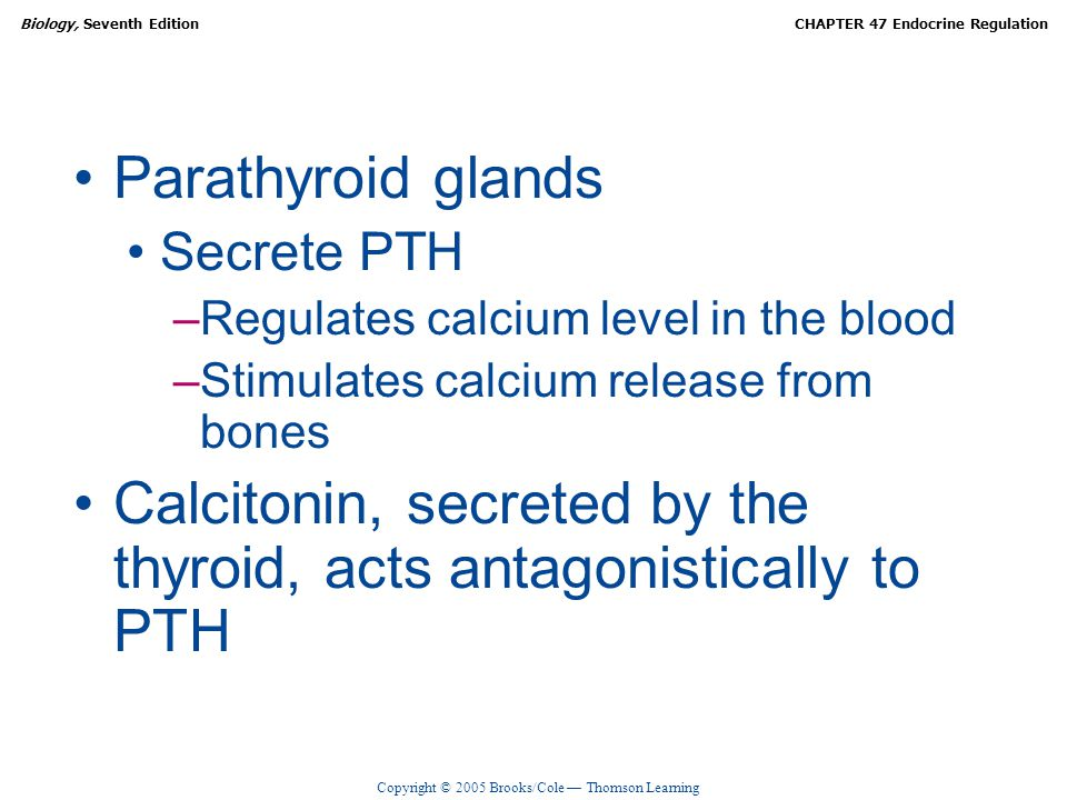 Calcitonin, secreted by the thyroid, acts antagonistically to PTH