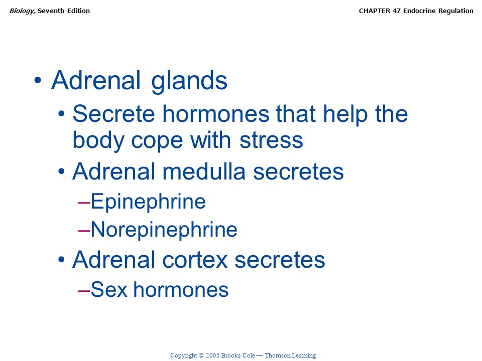 Adrenal glands Secrete hormones that help the body cope with stress