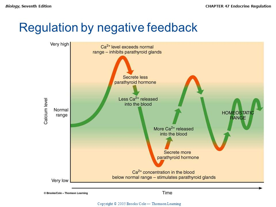 Regulation by negative feedback