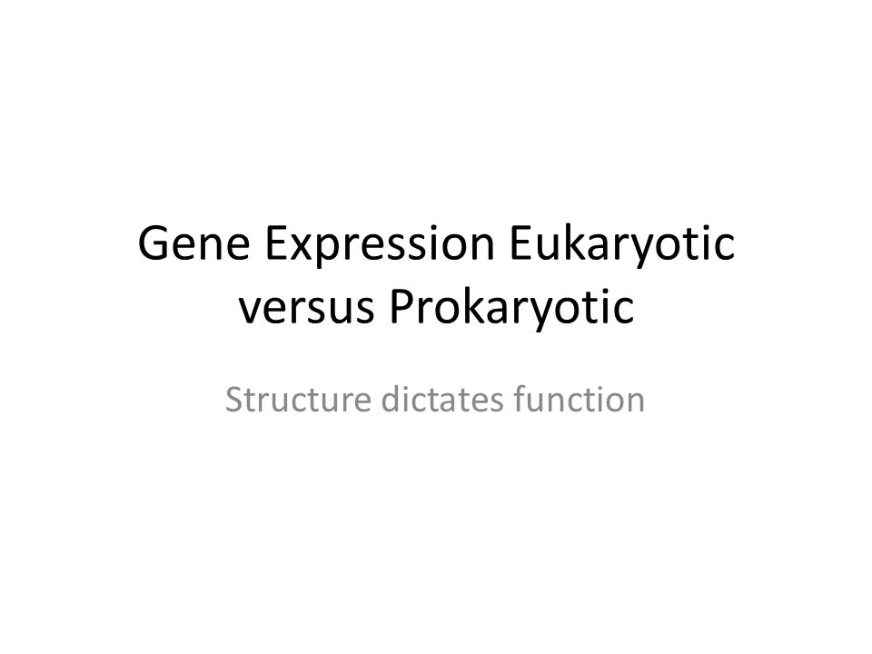Gene Expression Eukaryotic versus Prokaryotic