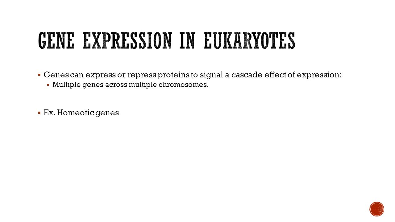 Gene expression in Eukaryotes