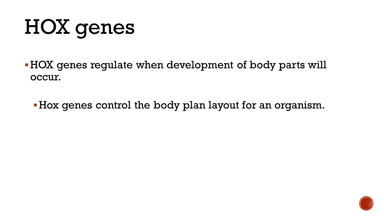 HOX genes HOX genes regulate when development of body parts will occur.