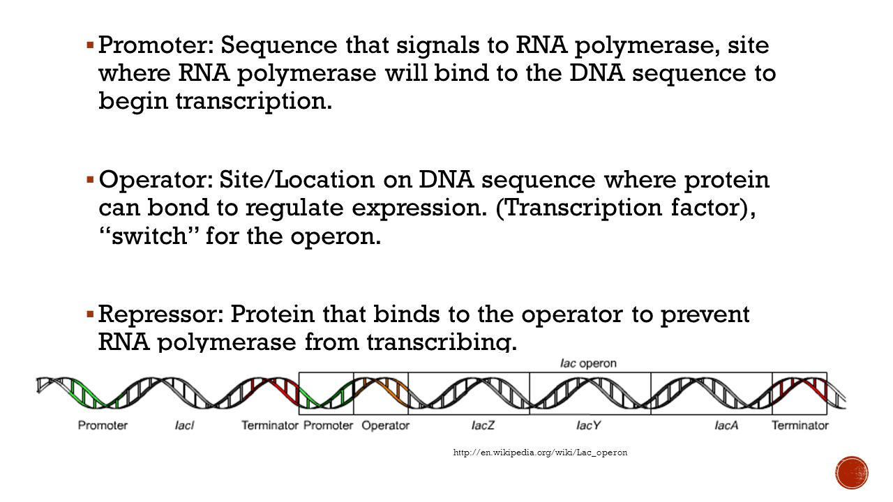 Promoter: Sequence that signals to RNA polymerase, site where RNA polymerase will bind to the DNA sequence to begin transcription.