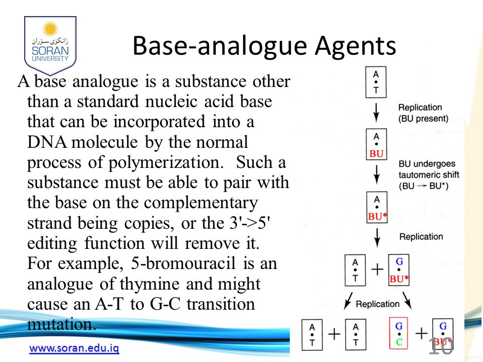 Base-analogue Agents