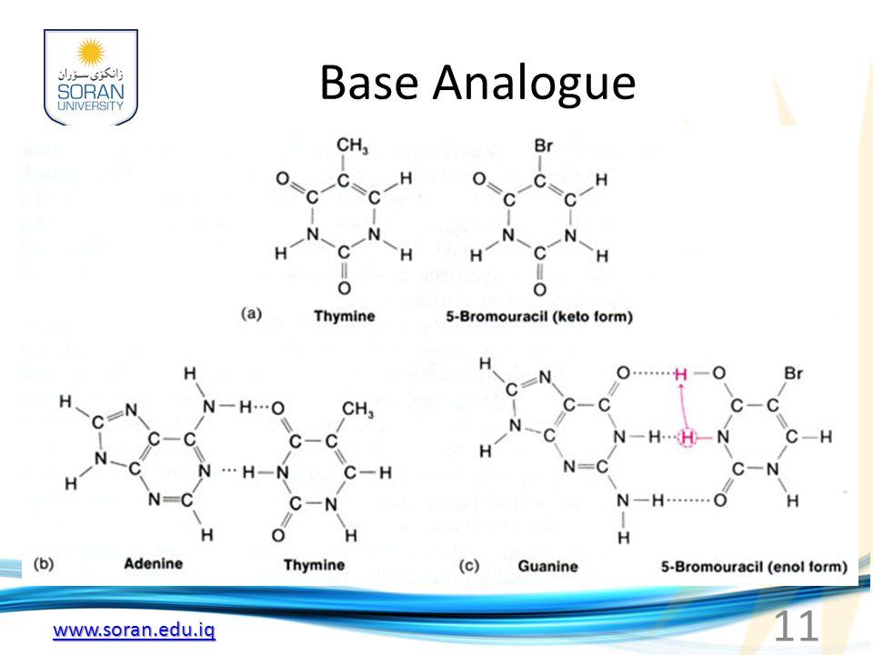 Base Analogue