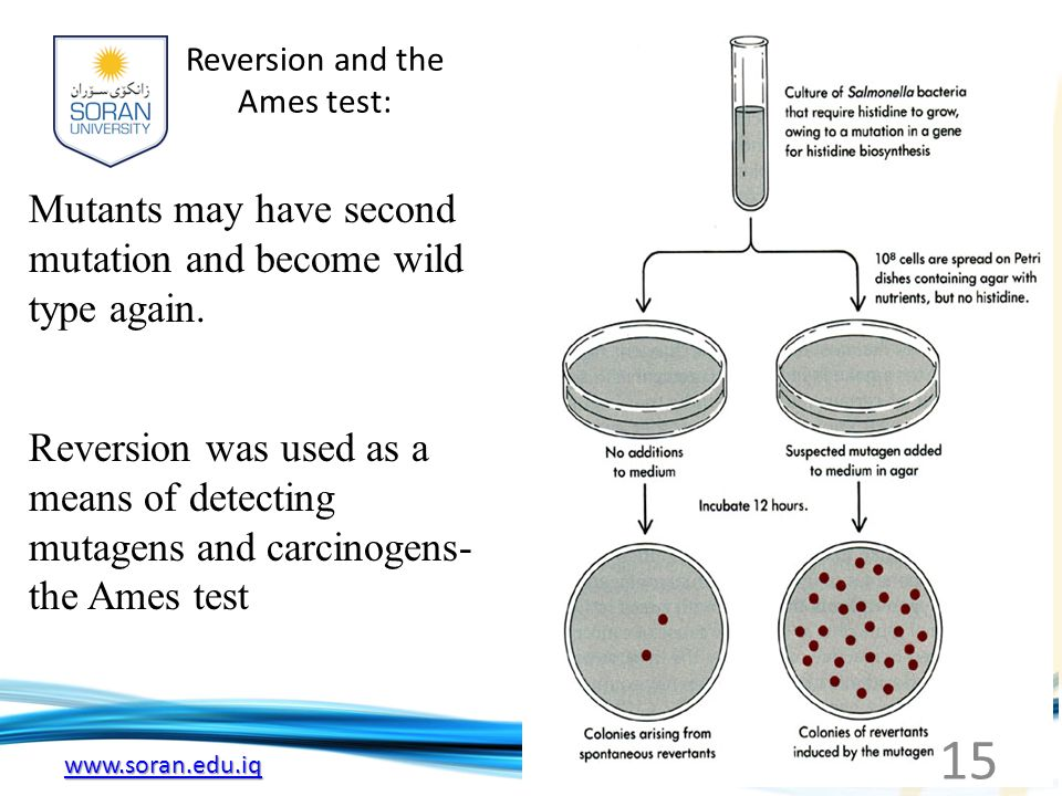 Reversion and the Ames test: