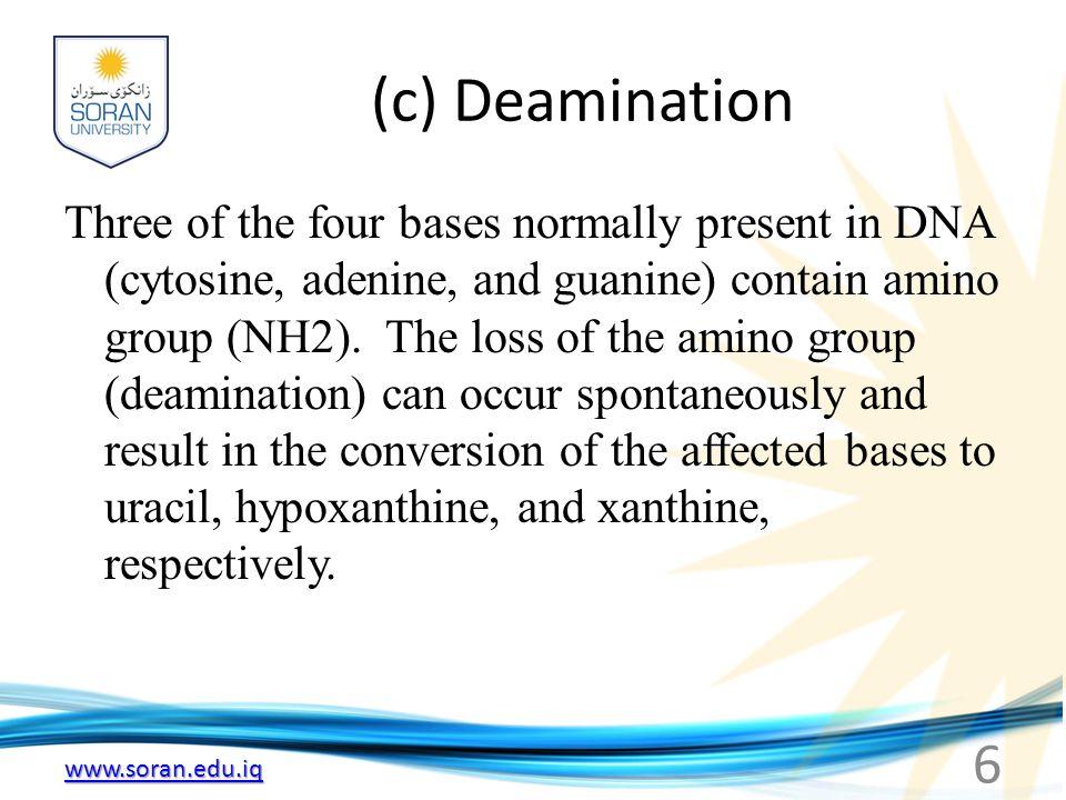 (c) Deamination