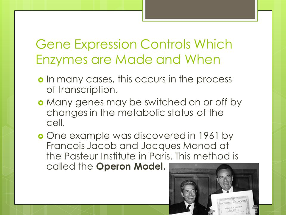 Gene Expression Controls Which Enzymes are Made and When