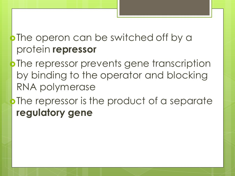 The operon can be switched off by a protein repressor