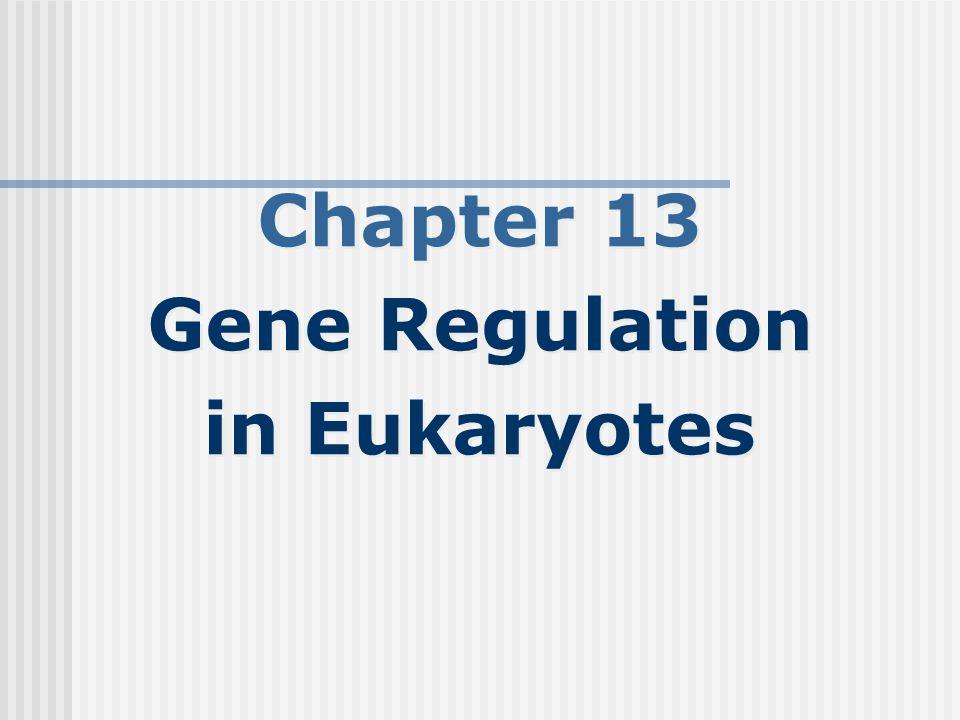 Chapter 13 Gene Regulation in Eukaryotes