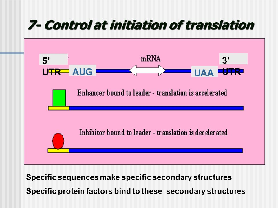 7- Control at initiation of translation