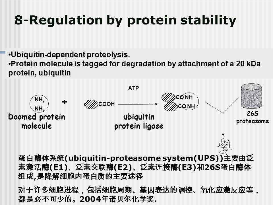 Doomed protein molecule ubiquitin protein ligase