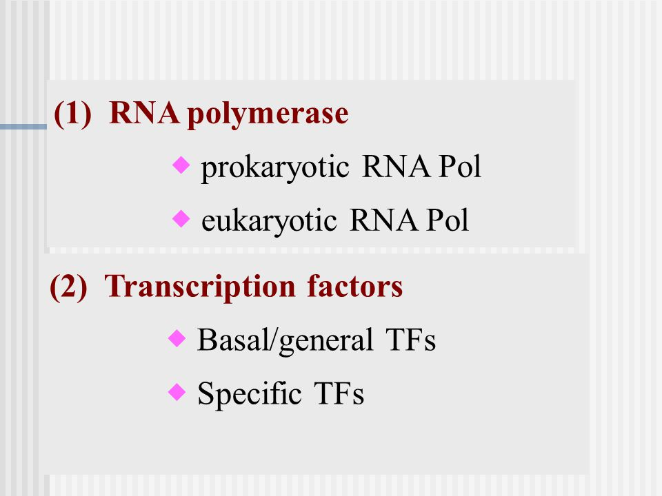 (1) RNA polymerase  prokaryotic RNA Pol.  eukaryotic RNA Pol. (2) Transcription factors.  Basal/general TFs.