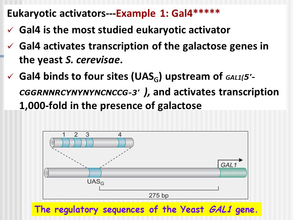 Eukaryotic activators---Example 1: Gal4*****